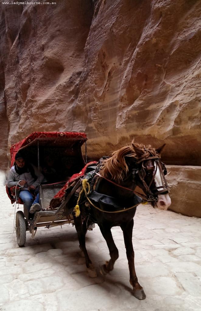 Bedouin horse and cart, Petra, Jordan